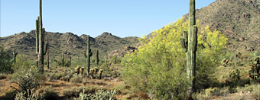 Surprise AZ Real Estate